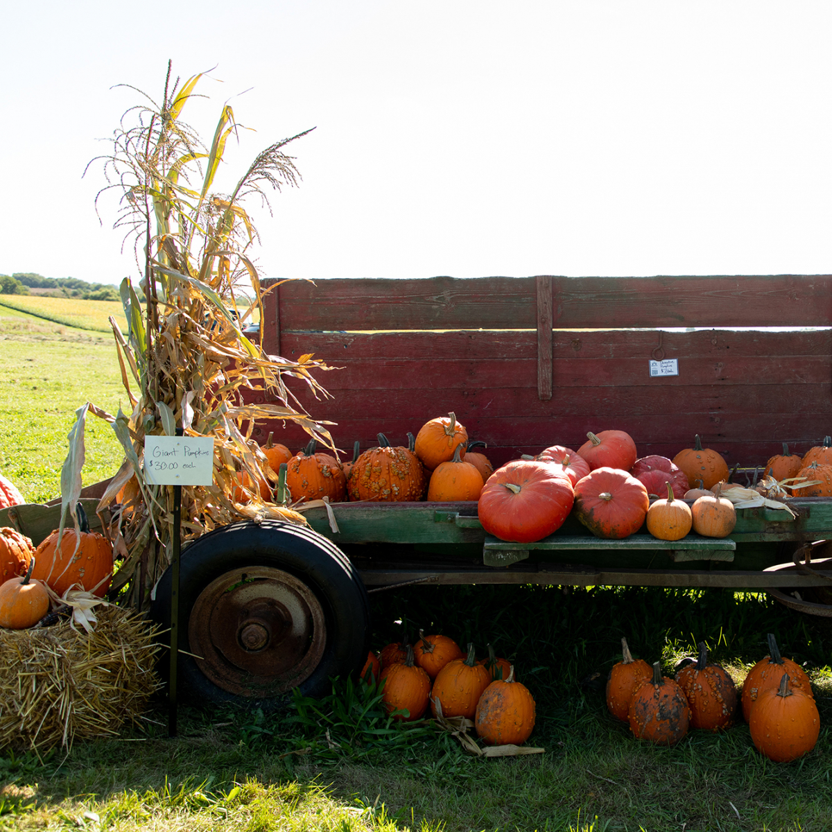 Middlebrook Farm Fall Fest